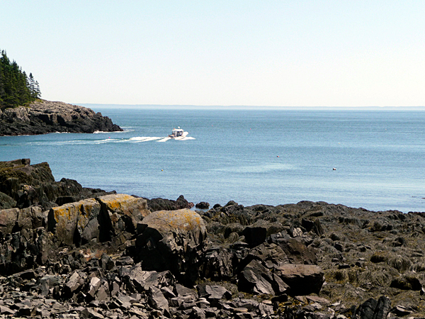 For hikers at Western Head Preserve in Cutler, working lobster boats can often be seen as they head to sea. This boat is heading around Little River Island towards the Bold Coast. The Western Head Preserve trail is a lovely diversity of up and down, field and wood, with magnificent ocean views from the headland, as well as beautiful views of the fishing village of Cutler. The preserve is 247 acres which was purchased in 1988 by the Maine Coast Heritage Trust. BANGOR DAILY NEWS PHOTO BY SHARON KILEY MACK