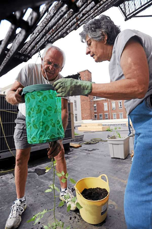 Charlie Taylor (left) and Gayle Crowley pot an upside-down tomato plant on the rooftop of Hammond Stret Senior Center on Saturday. The pair are in competition for a $5,000 online grant to expand the garden.  (BANGOR DAILY NEWS PHOTO BY KEVIN BENNETT)  CAPTION  Charlie Taylor, left, and Gayle Crowley, right, pot an upside down tomato plant on the roof top of the Hammond Street Senior Center on Saturday, June 12, 2010. The pair are in competition for a $5,000 online grant to expand the garden. (Bangor Daily News/Kevin Bennett)
