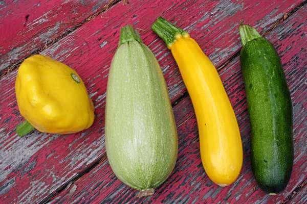 Garden Squash Varieties Garden Ftempo