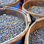 Wild blueberries on rise in frozen fruit market