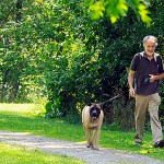 Bangor dog park focus of renewed energy