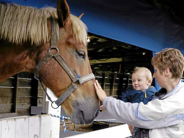 Animals large and small were a big draw for people large and small at the Northern Maine Fair. Eleven-month-old Ryan Griffeth gets his first up close look at a horse with his mother Cindy Griffeth of Eagle Lake. (BANGOR DAILY NEWS Photo by Julia Bayly)