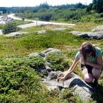 Aquatic insects target of Acadia 'bio blitz'