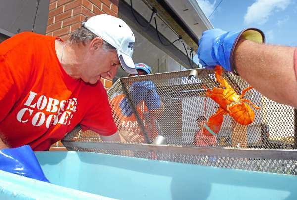 Don Borkowski (left) and Bruce Jordan, both of Rockland, unload freshly steamed 1 1/4-pound lobsters for consumption at the 63rd annual Maine Lobster Festival in Rockland on Wednesday, Aug. 4, 2010. The festival continues through the weekend at Harbor Park. (Bangor Daily News/Bridget Brown)