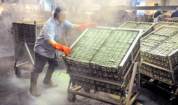 Steam rises as Jackie Dorr dumps hot water and fish oil from cans of sardines after they were precooked at the Stinson plant in Prospect Harbor on Thursday morning. The plant is to shut down next week, but many hope to find a buyer to reopen it as a canning facility for another kind of seafood. Dorr has worked at the cannery for 35 years.  (BANGOR DAILY NEWS PHOTO BY GABOR DEGRE)  CAPTION  Steam rises as Jackie Dorr dums hot water and fish oil from the cans of sardines after they were pre-cooked at the Stinson Sardine Cannery in Prospect Harbor Thursday morning.  The plant is set to shut down next week due to short supply of herring but a lot of people hope to find a buyer to reopen it as a canning facility for other kind of seafood. Dorr has worked there for 35 years. (Bangor daily News/Gabor Degre)
