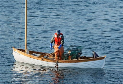 In this Wednesday, July 28, 2010 photo, lobsterman Nat Hussey returns an undersized lobster to the water off Matinicus Island, Maine. Hussey's 15-foot cedar-and-oak peapod is modeled after the boats used by fishermen dating back to the 1870s. (AP Photo/Robert F. Bukaty)