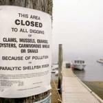 Brunswick updating harbor rules with eye toward charging mooring fees