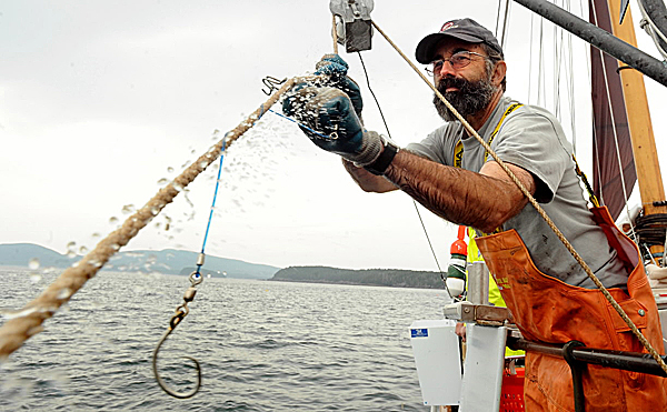 (BANGOR DAILY NEWS PHOTO BY GABOR DEGRE)CAPTIONBrian Tarbox takes a fishing hook off of a trawl while hauling out the line from Frenchman Bay near Jordan Island Tuesday aboard the 56 foot wooden schoner the Alert.  The MDI Biological Laboratory collaborating with the University of New Hampshire and other researchers and organzations to assess current fish stock in the area.  They are using traditional methods and will compare the size of the groundfish catch to fishing vessel log books from the 1860's.   (Bangor Daily News/Gabor Degre)