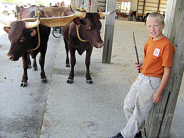 Thomas Bickford, 10, who lives at Misty Meadow Farm in Clinton, watches over two steer in preparation for a cattle-showing competition on Friday, Aug. 13, 2010, at the Skowhegan State Fair. The toughest thing to teach these cattle, who are named Duke and Dan, is to walk backwards, said Bickford. (Bangor Daily News/Christopher Cousins)