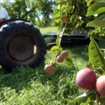 Apple growers struggling with tough season