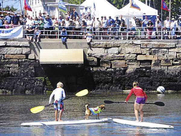 Elliot Matlack, 10, of Camden, and his sister Abigail Matlack, 13, maneuver surfboards in Rockland's harbor Sunday as their dog, Pancho Villa, prepares to jump from one board to the other. Pancho, a half-pug/half-beagle, beat out five canine competitors to win the contest for the second year running. (Bangor Daily News Photo by Bill Trotter)