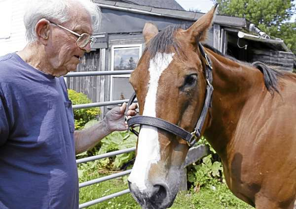 Roice Saunders, 88, holds the bridle of his horse Mr. T on Aug. 10 at his home in Ellsworth. Buy Photo