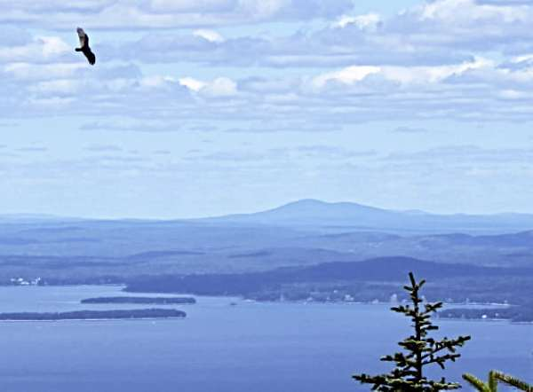 A turkey vulture flies close to a hawk-watching group on Cadillac Mountain on Tuesday, Aug. 24. Mount Desert Island's hawk migration season officially began Aug. 22. (Bangor Daily News Photo by Aislinn Sarnacki)