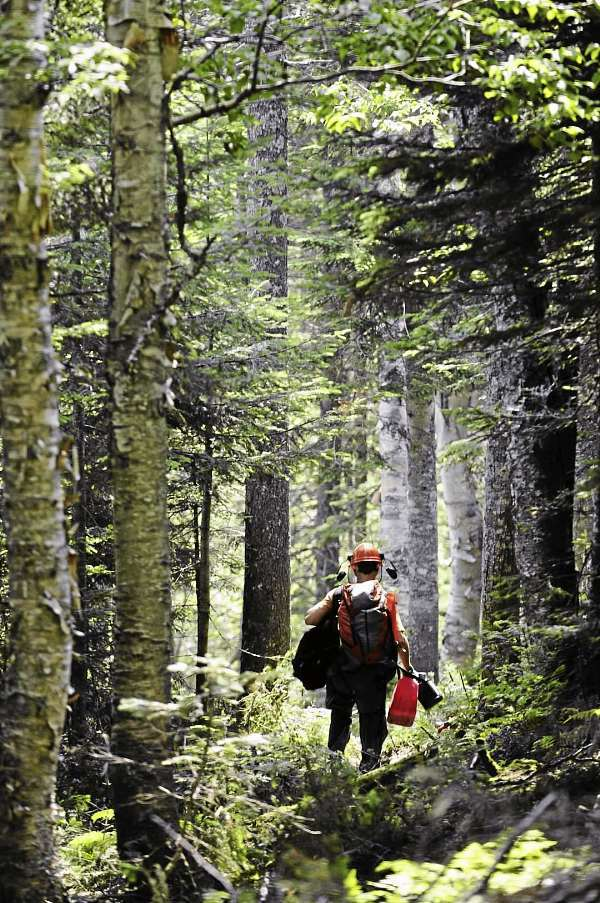 Jesse Williams walking through some thinned out trees in the Cant Dog glade. PHOTO COURTESY OF SUGARLOAF