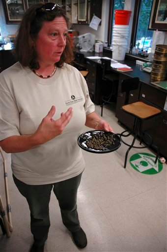 In this Aug. 30, 2010 photo, Sandra Nierzwicki-Bauer, director of the Darrin Freshwater Institute, holds samples of Asian clams found in Lake George, in Bolton Landing, N.Y. She leads a team of scientists studying invasive Asian clams in Lake George. Scientists consider the clams arrival a stroke of bad luck that could cause ecological and economic harm. They hope to smother the rapidly reproducing mollusks before they spread. (AP Photo/Mary Esch)