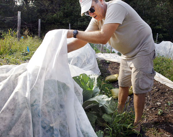 Paul Lipsky keeps netting over his cabbage to prevent moths  from ruining his crop Wednesday in Newburgh, Maine. The &quotA Stone's Throw Farm&quot does not use any pesticides so preventing bugs is left to manual procedures. Buy Photo