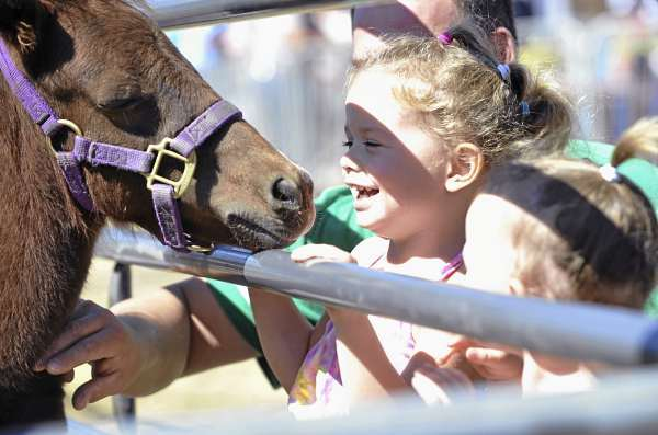 Waiting for a pony ride, three-year-old Kayla Hatt (cq) of Brewer giggles as a pony from Brown Family Farm in Charlotte tries to nudge her at the Blue Hill Fair Sunday, September 5, 2010. Kayla came with her little sister Lillian Hatt,2, and her parents Kelly and Curtis Hatt.  The annual fair kicked off Thursday and runs through Labor Day. (Bangor Daily News/John Clarke Russ)-----WEB ONLY