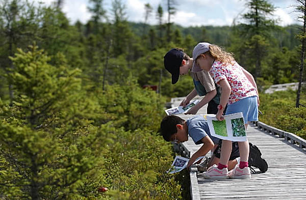 Brandon Woo, (kneeling) Madeline Marks and  her brother Jamie match pictures of bog plants with the real plants along the Orono Bog Boardwalk. (BANGOR DAILY NEWS PHOTO BY KEVIN BENNETT)