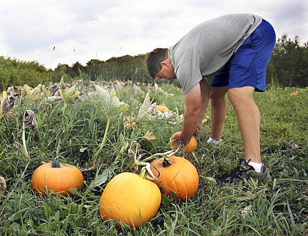 PUMPKIN PATCH ? Todd Willard, an outdoor education teacher at Houlton High School, checks out the pumpkins growing behind the school Thursday. The gourds are available to the public as a ?pick-your-own pumpkin? with the proceeds benefitng the school farm. Houlton Pioneer Times Photo/Joseph Cyr