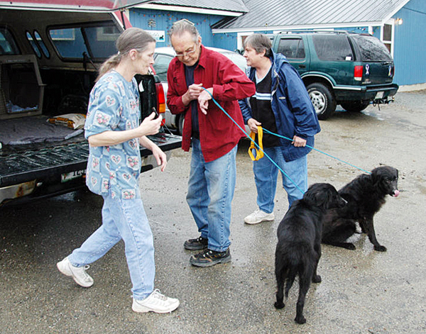 Penobscot Valley Humane Society Manager Meg Crocker-Curtis (left to right), an unidentified shelter volunteer and Helen Kazura, a volunteer with Almost Home Rescue of Ellsworth, work to get two Labrador mix dogs into the back of Kazura?s pickup truck at the Lincoln shelter. The two dogs were the first adopted of seven rescued from an Enfield homei in March. BANGOR DAILY NEWS PHOTO BY NICK SAMBIDES JR.