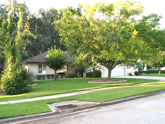 This property at 558 Woodgrove St. in Ormond Beach, was purchased by Ann LePage in December 2008 and a homestead exemption filed Jan 20, 2009. 2 col max