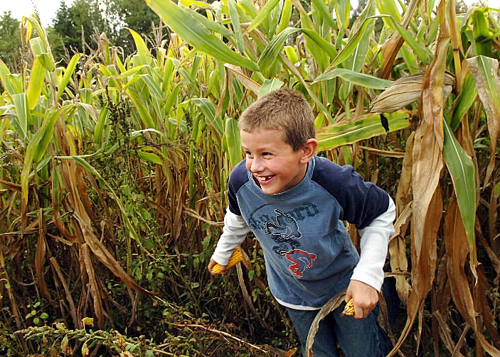 Robert Dostie, 9, of Fort Fairfield darts through Thunder Road Farm's 8-acre corn maze in Corinna on Sunday, Sept. 19, 2010, which opened this weekend and runs through Oct. 30. (Bangor Daily News/Bridget Brown)