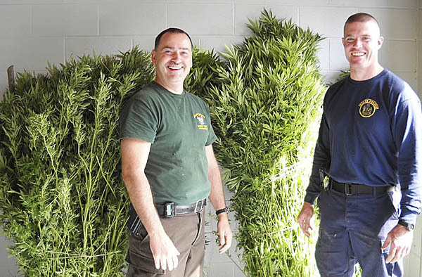 Det. Merl Reed of the Waldo County Sheriff's Office (l) and Trooper Elisha Fowlie of the Maine State Police harvested these six-foot-tall marijuana plants Tuesday morning in Frankfort, Maine. The 19 plants had been growing deep in the woods, far away from a road or a house, and were reported by someone who came across them, said Lt. Jason Trundy of the sheriff's office. &quotThere's no way to link them to anybody,&quot he said. Police likely will take the marijuana to be burned at the PERC incinerator in Orrington.