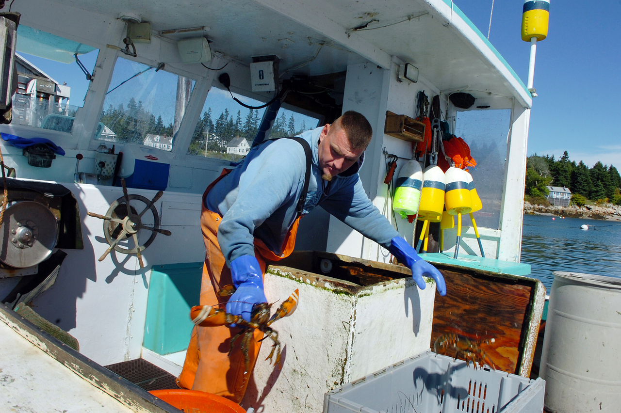Sternman Chris Bruce unloads lobsters aboard Endeavor, which he fishes on with owner Jason MacDonald, at the Stonington Lobster Co-op on Monday, Sept. 20, 2010. (Bangor Daily News/Bridget Brown)