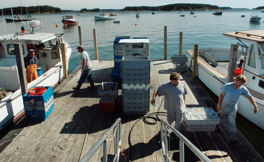 Lobsterman Bryant Ciomei (from left) talks to Tim Bruphy as Dan Larrabee and Richard Nevells carry a full crate of lobsters at the Stonington Lobster Co-op on Monday, Sept. 20, 2010. &quotVolume's been good,&quot said Co-op manager Steve Robbins III (not pictured) who buys from nearly 100 fishermen. &quotA lot of fishermen are kind of tentative because of the early spring we had but we got a lot of year left.&quot (Bangor Daily News/Bridget Brown)
