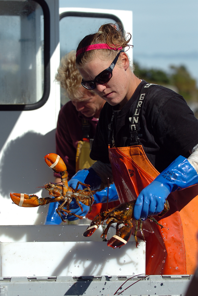 Sternwoman Alyssa LaPointe unloads lobsters with Frank Gotwals aboard Gotwals' lobsterboat at the Stonington Lobster Co-op on Monday, Sept. 20, 2010. &quotWe've had a pretty good season,&quot said Gotwals of this year's lobstering. &quotWe've done a little better than last year and hopefully we'll have a good fall.&quot (Bangor Daily News/Bridget Brown)