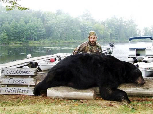 Dave Rizkallah, of Derry, N.H., poses with the black bear he shot while hunting out of Wilderness Escape Outfitters in T8, R4 near Danforth on Sept. 7. The bear was weighed on three scales after being field-dressed with its weight ranging from 490 to 497 3/4 pounds. Guide Randy Flannery estimates that the bear's live weight would have been between 602 and 622 pounds. (Photo courtesy of Sharon Flannery) w/HOLYOKE STORY, 2 col max