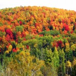 Autumn colors creep into Maine foliage