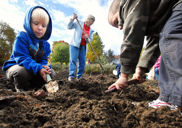 Kindergartners Tucker Lord,5, left, and Ethan Lavoie,5, right, help Barbara Day, center, harvest red potatoes with other Hartland Consolidated School students in Day's garden. Students from the school visited Mrs. Day's garden and were each treated to a tour and to a bag full of items they helped harvest in Day's garden in Hartland Monday, Oct. 4, 2010. (Bangor Daily News/John Clarke Russ)