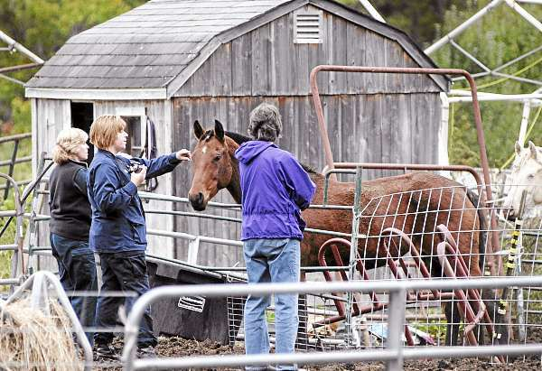 Left to right: Maine Animal Welfare veterinarian Christine Fraser (cq), Maine Animal Welfare district humane agent Chrissy Perry (cq) and Animal Welfare Advisory Council chair Christina Perkins checked six horses corralled in a yard off Bald Mountain Road in Dedham before removing them with a livestock trailer Wednesday afternoon, October 6, 2010.  According to neighbors, the horses' owner has been away from the property for nearly a week, leaving the horses outside without much food. (Bangor Daily News/John Clarke Russ)