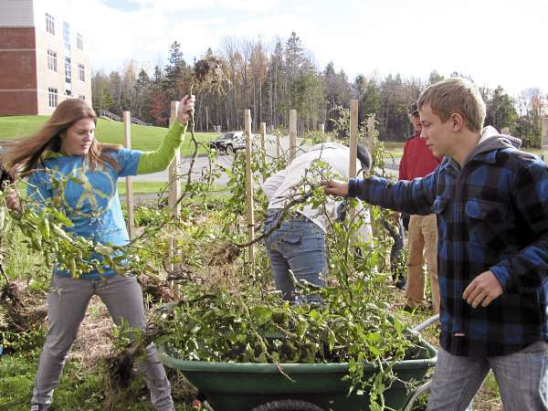 Lynsie Thomas, 17, of Brooks works with Mert Danna, 16, of Jackson, on Friday, Oct. 22 at Mount View High School in Thorndike. The students, both members of the club PeaceJam, gathered up remaining tomato plants in their organic gardens behind the school. (Abigail Curtis/BDN)