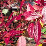 Foliage helps light up gardens in the fall