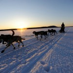 84 sled dog racers registered for Can-Am Crown March 5