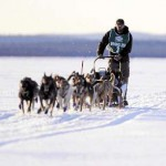 83 mushers signed up for 19th Can-Am Crown