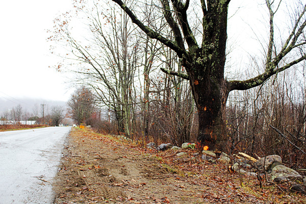 Three young people were killed when a pickup truck hit this tree on the Barnestown Road in the town of Hope late Monday night, Nov. 8, 2010. (Bangor Daily News/Heather Steeves)