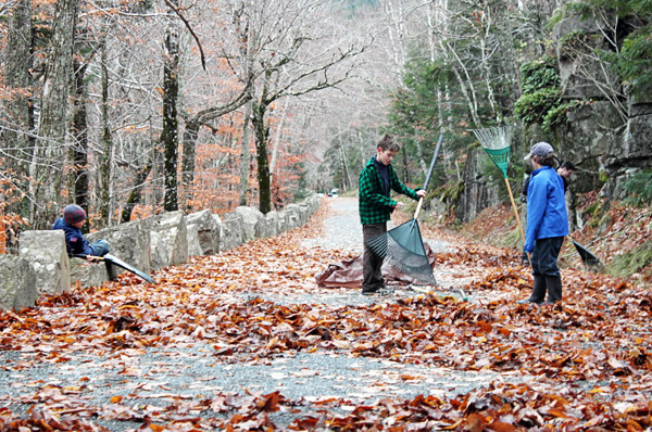 Acadia Pride Day: Boy Scouts Michael Kazmierczak, 8, of Ellsworth, left, Jack Sandone, 9, of Ellsworth, and Henry Muise, 8, of Clinton rake along the Eagle Lake Loop in Acadia National Park on Saturday (Nov. 6, 2010) for Take Pride in Acadia Day. The boys worked nearly four hours clearing the carriage road for winter, as did about 500 other volunteers. (Bangor Daily News photo by Aislinn Sarnacki)