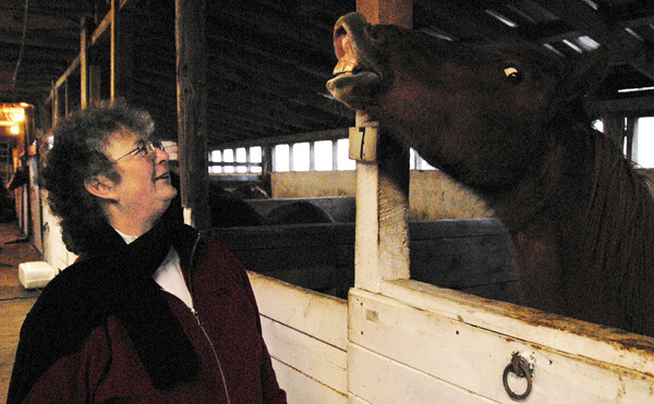 Stable owner Debra McKay, 52, of Lee, watches as one of her horses acts up playfully in search of a snack on Friday, November 19, 2010. (BDN/Nick Sambides)
