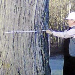 CMP trimming trees in Knox and Waldo counties