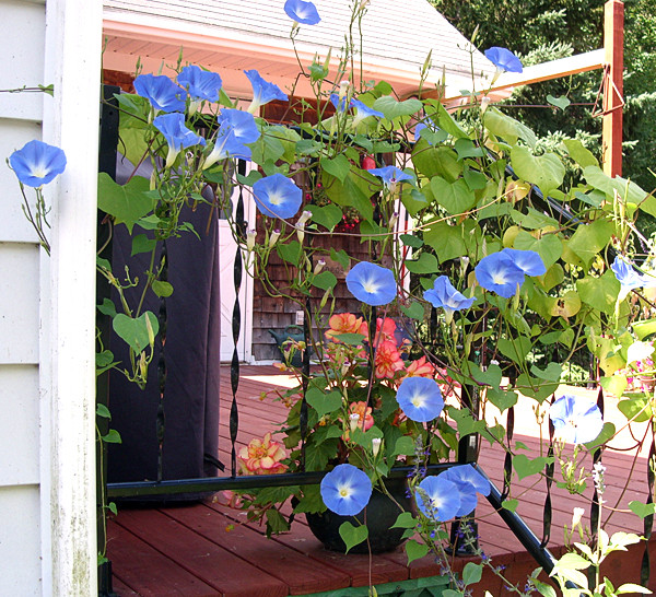 Janine Pineo Photo