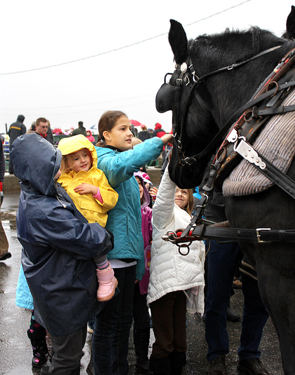 Children pet two Percheron horses who pulled a carriage Friday. The rides are free from noon-4 p.m. every Saturday on Main Street in Rockland until Christmas. (Bangor Daily News/Heather Steeves)