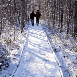Orono Bog Boardwalk Opens for Season