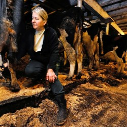 Snowe, Collins seek review of price for raw milk
