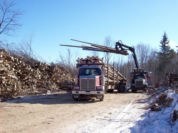 A  truck is loaded at a log yard on Prentiss and Carlisle-managed client land in Millinocket in the winter of 2008. (Photo courtesy of Prentiss & Carlisle)