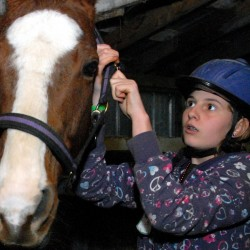 KD Stable helping horses, teenagers heal, learn to trust
