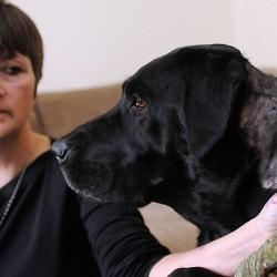 Dog that bit Bangor woman has moved, bite victim says