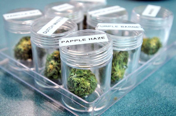 Patrons of Zoo Mountain Natural Care Inc. in Missoula, Montana can examine samples of pot the company offers before buying. April 2010 file photo.